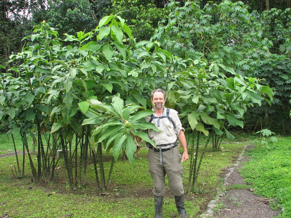 Photo# 16113 - Costus guanaiensis var. tarmicus at Rio Palenque, Ecuador