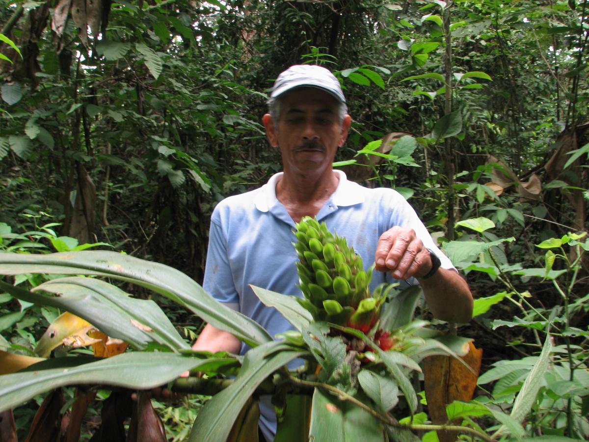 Photo# 16216 - Costus guanaiensis var. guan. from Juaneche Reserve, Ecuador