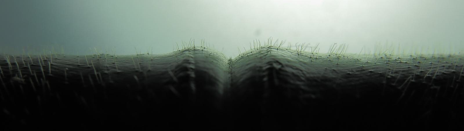 Photo# 18015 - Costus guanaiensis Siete Cataratas, upper leaf surface hairs