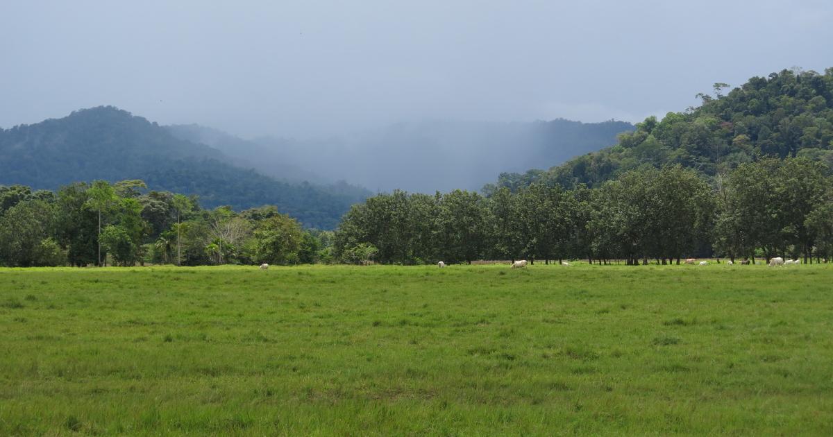 Photo# 15793 - Costus 'Reinaldo' - pasture land near Rincon, Costa Rica where this plant was found.