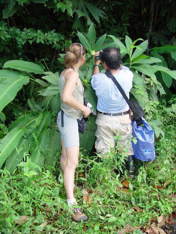 Photo# 10894 - Costus guanaiensis near Rincon, Osa Peninsula, Costa Rica Eva Schembera and Reinaldo Aquilar photographing flower of