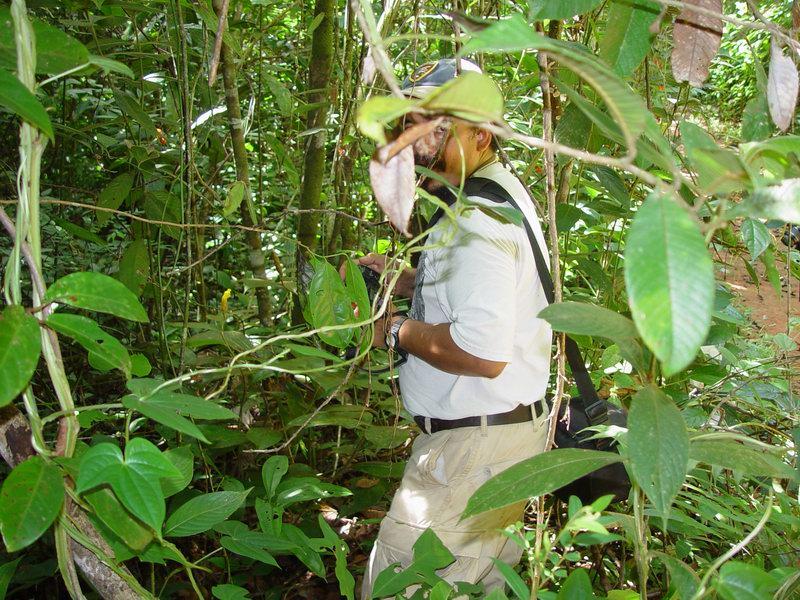 Photo# 11039 - Costus lasius on trail near Mogos, Osa Peninsula, Costa Rica Reinaldo photographing