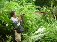 Costus lima near Rincon, Osa Peninsula, Costa Rica Reinaldo photographing - Click to see full sized image