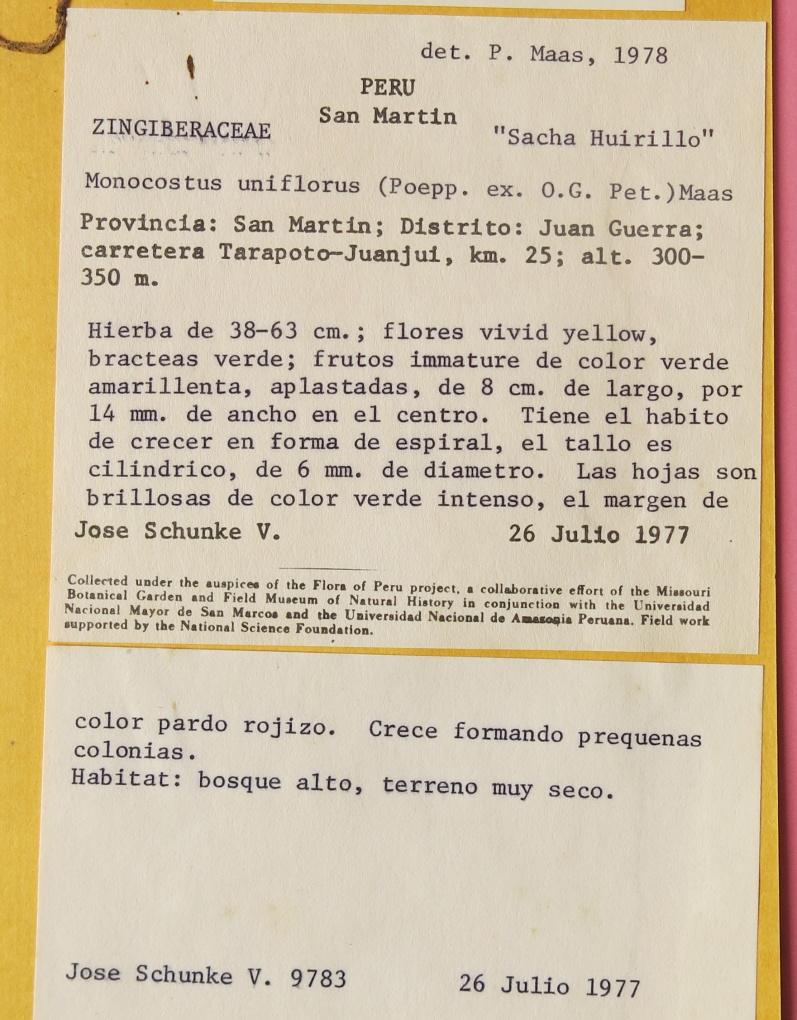 Photo# 17490 - Monocostus uniflorus, notation on herbarium sheet